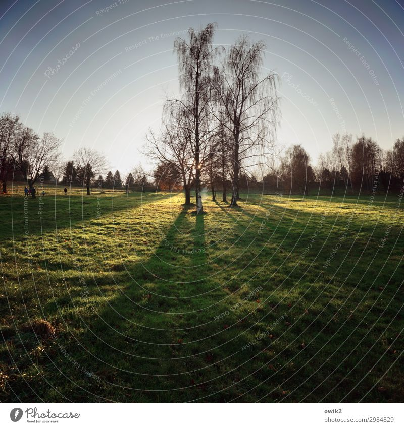Forest and meadow picture Environment Nature Landscape Plant Cloudless sky Horizon Autumn Beautiful weather Tree Grass Birch tree Meadow Illuminate Stand Growth