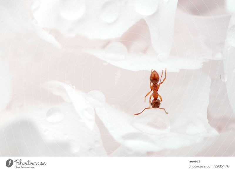 Nature White Flower Blossom Spring Rain Weather Drops of water Drinking water Uniqueness Speed Seasons Rose Insect Hang