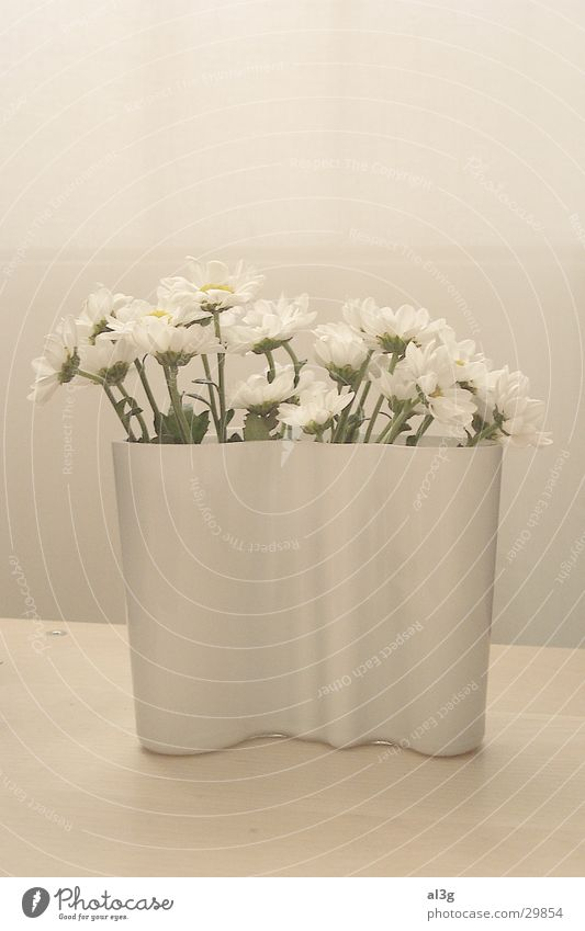 White Flower Living or residing Vase