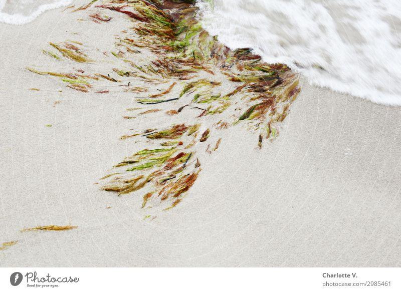 Flowing movements Nature Elements Sand Plant Algae Aquatic plant Coast Beach Baltic Sea Ocean Water Ornament Movement Elegant Fluid Fresh Maritime Wet Soft
