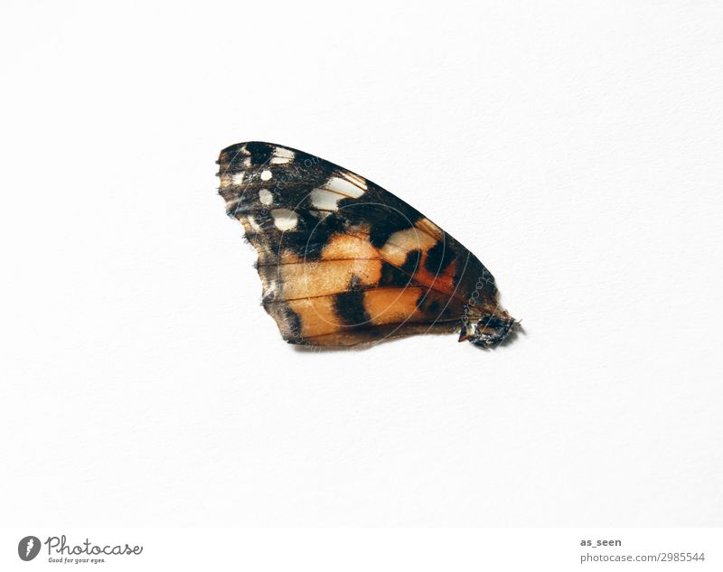 Nature White Red Animal Black Natural Sadness Emotions Small Orange Brown Flying Moody Design Lie Esthetic