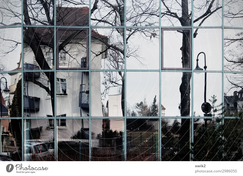 building scan Tree Bautzen Small Town Old town Populated House (Residential Structure) Wall (barrier) Wall (building) Facade Window Street lighting Glas facade