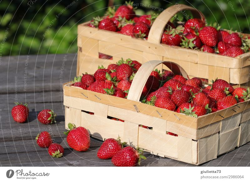 Strawberry Dream Summer Beautiful weather Delicious Basket Garden Fresh Healthy Eating Vegan diet Red Fruit June Crops Natural Harvest Ecological