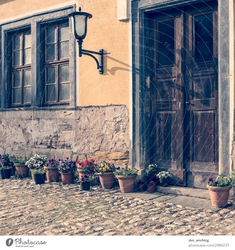 Old entrance with decoration Street lighting Plant Summer Beautiful weather Flower Pot plant Village Town Old town Deserted House (Residential Structure) Window