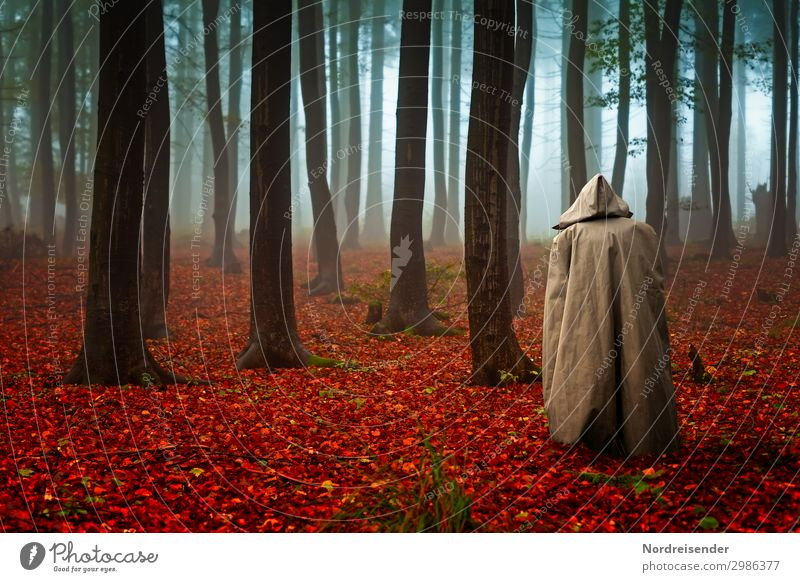 forest whispers Senses Calm Meditation Human being Androgynous 1 Nature Landscape Plant Elements Autumn Bad weather Fog Rain Tree Forest Lanes & trails Stand