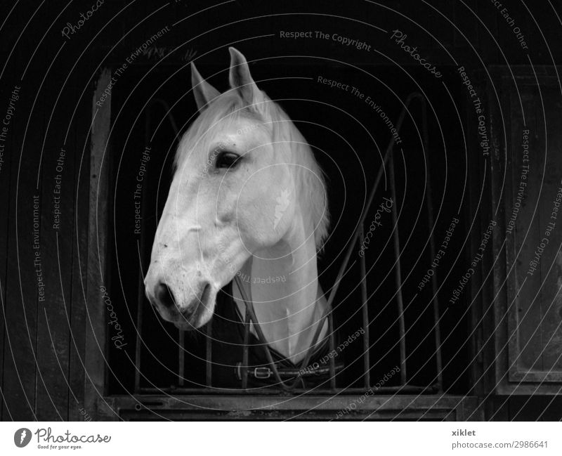 Horse Equestrian sports Animal Farm animal 1 Steel Observe Catch Far-off places Beautiful Gloomy Wild Black White Acceptance Safety Love of animals Peaceful