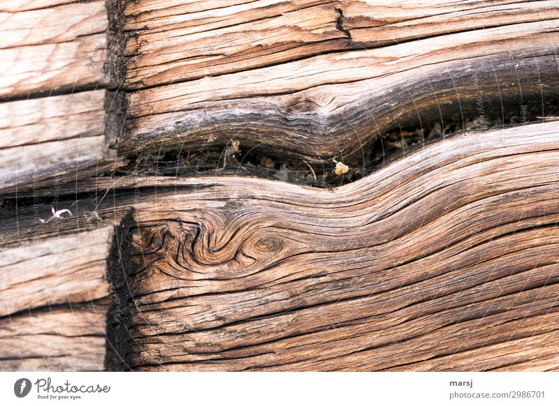 willful Wood Crack & Rip & Tear Wood grain Old Exceptional Elegant Dry Cut Patina Weathered deceased Headstrong Colour photo Subdued colour Exterior shot