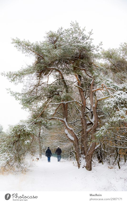 Walker in a winter landscape Human being Masculine Feminine Female senior Woman Male senior Man Couple 2 45 - 60 years Adults Environment Nature Landscape Plant