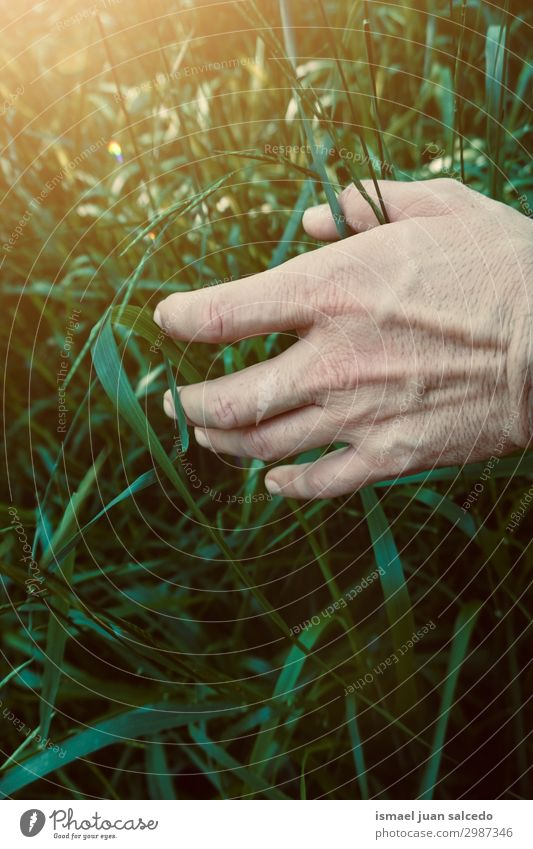 hand with green leaves in the nature Nature Summer Beautiful Green Hand Leaf Spring Bright Fresh Fingers Hold Fragile