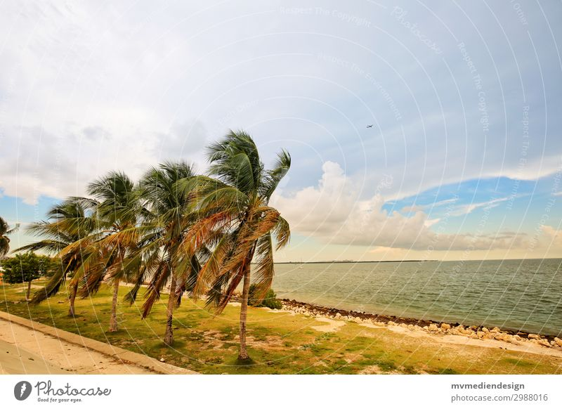 palm Environment Nature Sand Sun Outskirts Moody Palm tree Wind Miami Miami Beach Storm Ocean Coastal road USA Florida Florida Keys Colour photo