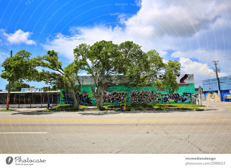 graffiti Environment Nature Esthetic Happy Modern Beautiful Tree Graffiti Wynwood walls Miami downtown USA Florida Colour photo