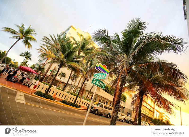 Gay Ocean Drive Downtown Street Crossroads Road junction Hip & trendy Crazy Reliability Eroticism Multicoloured Homosexual Miami Miami Beach USA Palm tree