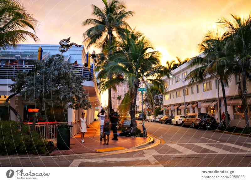 Miami Beach Town Downtown Street Crossroads Hip & trendy Warmth Palm tree Human being Sunset Colour photo Exterior shot
