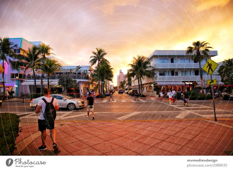 Miami Beach - Ocean Drive Human being Masculine Street Warmth Sunset USA Palm tree Restaurant Party Colour photo Exterior shot