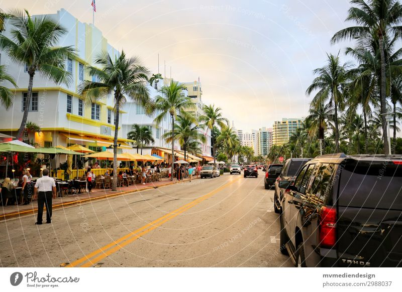 Miami Beach Building Architecture Street Warmth USA Florida Palm tree Shopping Restaurant Colour photo Exterior shot