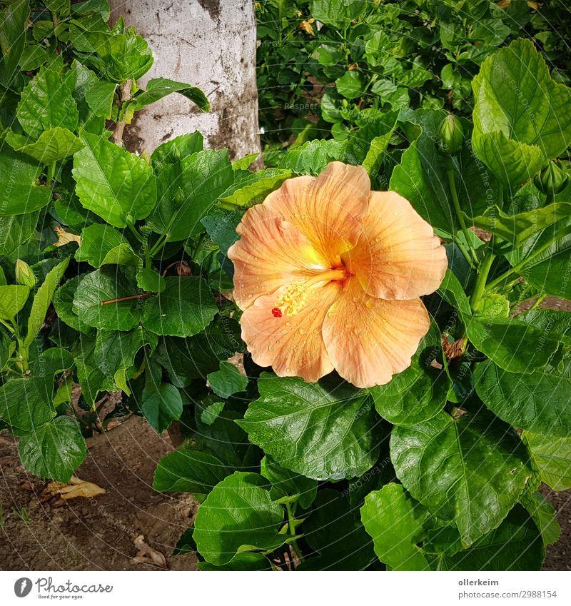 Nature Summer Plant Green Flower Environment Orange Gray Exotic