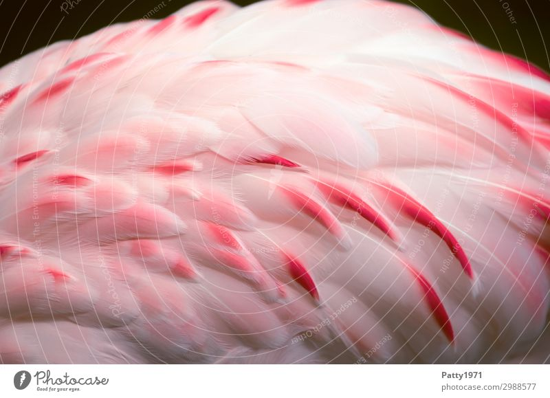flamingo Animal Wild animal Bird Wing Flamingo Feather 1 Elegant Exotic Beautiful Soft Pink White Nature Tourism Colour photo Detail Deserted Animal portrait