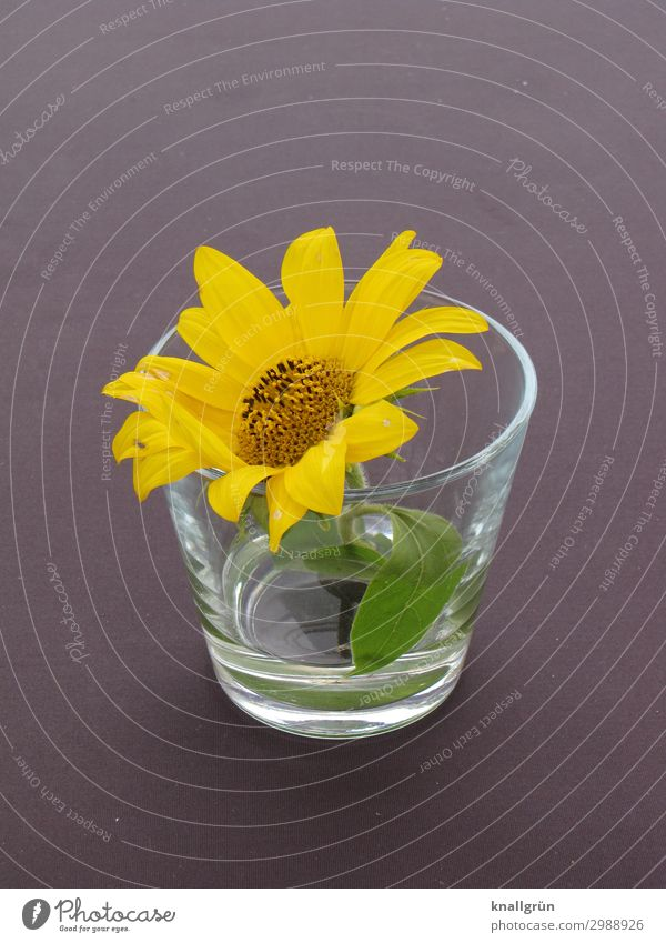 table decoration Plant Flower Blossom Tumbler Yellow Gray Green Decoration Design Colour photo Interior shot Deserted Copy Space left Copy Space right