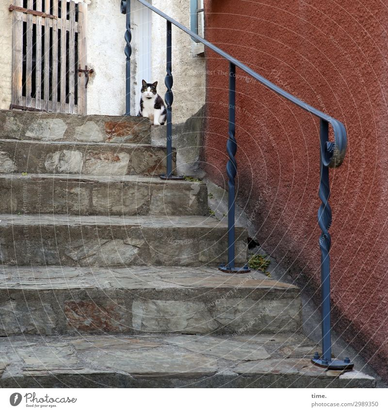 village tiger Wall (barrier) Wall (building) Stairs Door Banister Gate Animal Pet Cat 1 Observe Looking Sit Watchfulness Curiosity Interest Surprise Stress