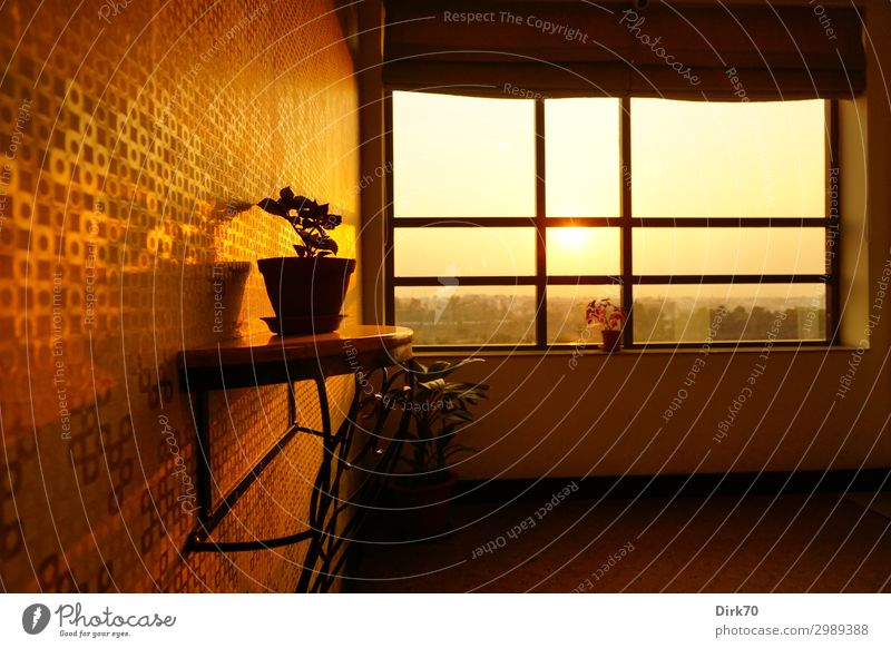 Interior Design in India Vacation & Travel Tourism Far-off places Sun Sunrise Sunset Sunlight Beautiful weather Pot plant Jamshedpur Jharkhand Town Downtown