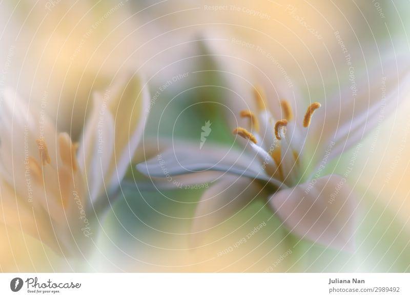 Orange Nature Macro Photography.Floral Art Design.Jasmine. Lifestyle Luxury Elegant Style Exotic Joy Work of art Plant Love Esthetic Exceptional Fantastic
