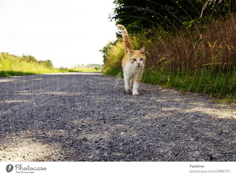 hiking day Environment Nature Landscape Plant Animal Elements Earth Sand Summer Beautiful weather Warmth Tree Grass Bushes Park Meadow Pet Cat Animal face Pelt