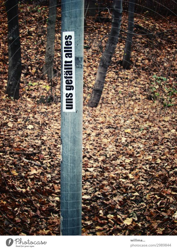 we like everything Like Fallen Text Sign Contentment unopposed Adjustment yes-sayer Irony Label Forest Leaf Autumn Exterior shot Colour photo
