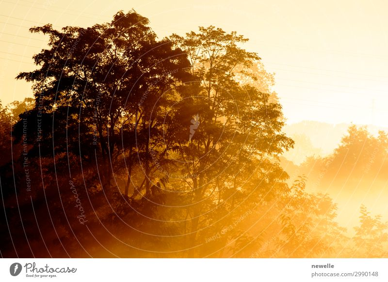 Sunrise on a background of a misty landscape with tree Beautiful Summer Nature Landscape Autumn Fog Tree Leaf Park Forest Dark Bright Yellow Mysterious Ray