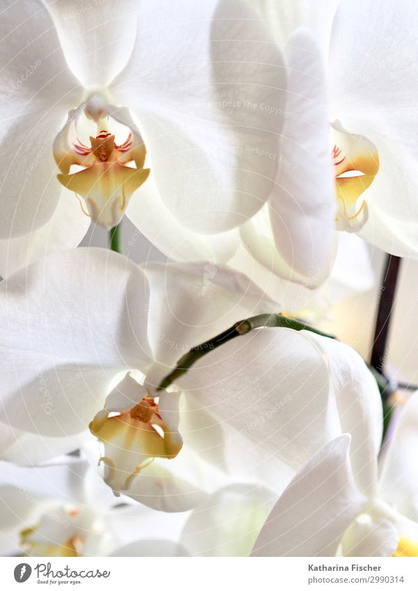 Nature Summer Plant White Winter Autumn Yellow Spring Orange Bouquet Orchid Orchid blossom