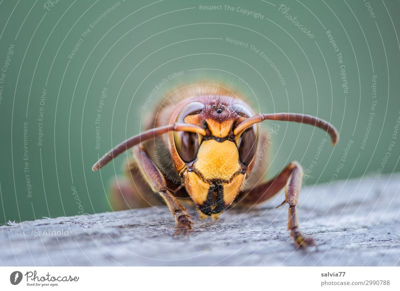 rodent Environment Nature Animal Wild animal Animal face Wasps Hornet Feeler Compound eye 1 Wood Exceptional Threat Colour photo Exterior shot
