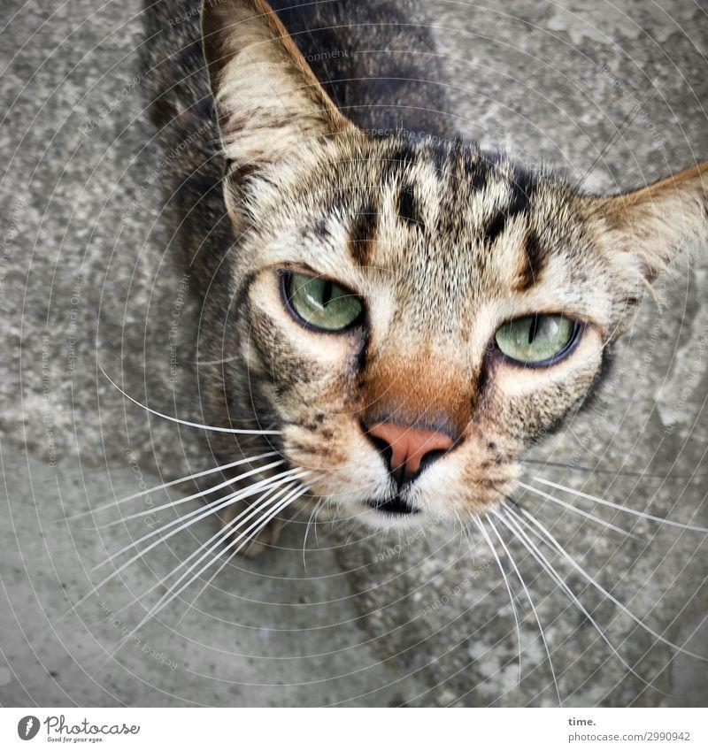 bon jour mesdamessieurs Animal Pet Cat Animal face Pelt 1 Observe Looking Wait Self-confident Watchfulness Patient Endurance Unwavering Curiosity Interest