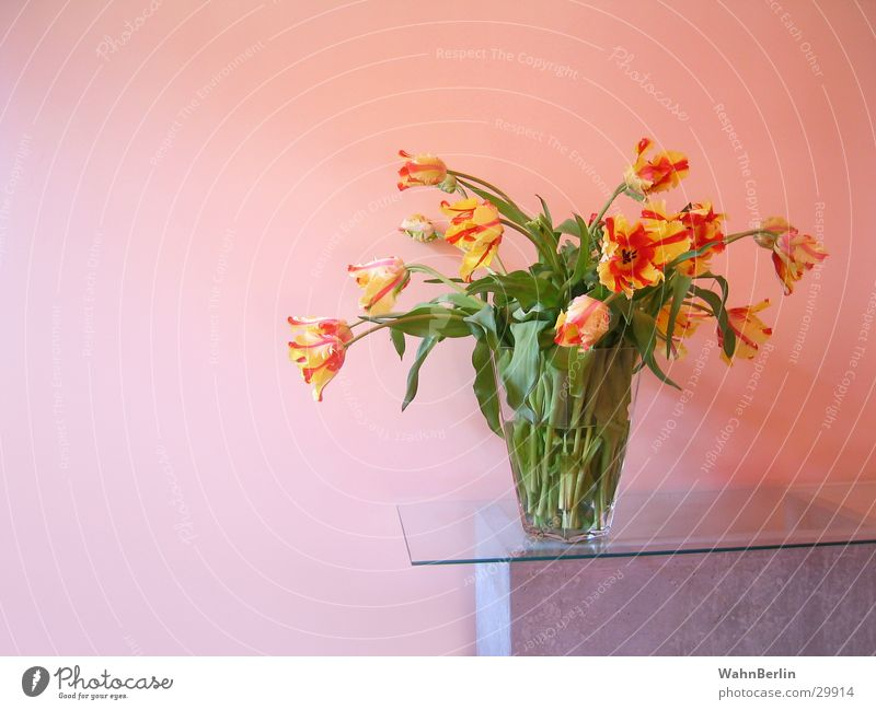 Style Bouquet Still Life Tulip Pane Color gradient