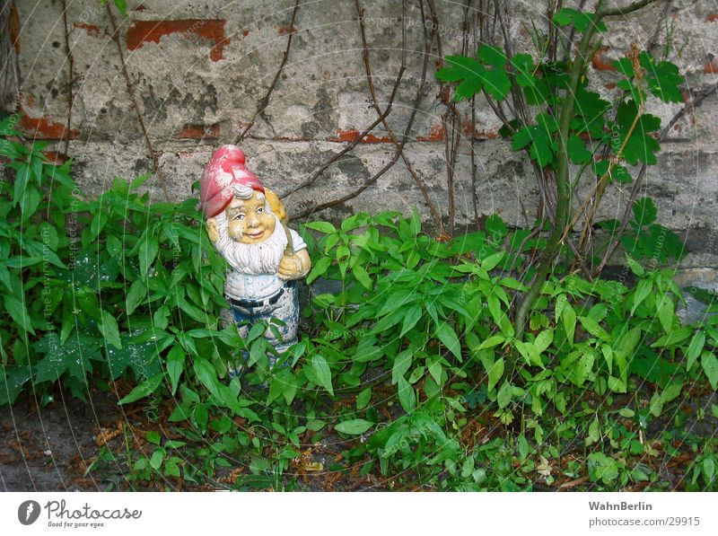 Shady dwarf place Garden gnome Goblin Creeper Santa Claus hat Wilderness Obscure raw wall
