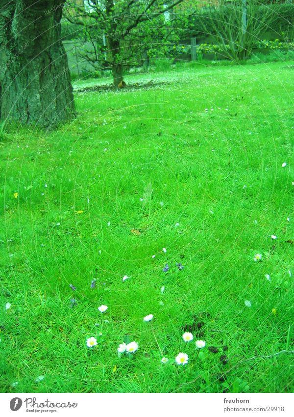 spring garden Tree Spring Grass Garden Lawn Daisy Far-off places