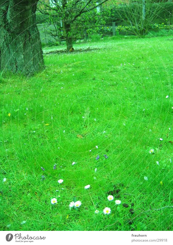 Tree Far-off places Grass Spring Garden Lawn Daisy