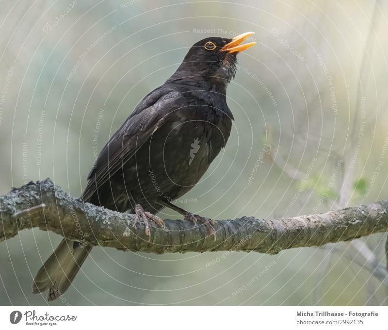 Nature Green Tree Animal Black Yellow Eyes Natural Orange Bird Communicate Wild animal Stand Feather Beautiful weather Wing