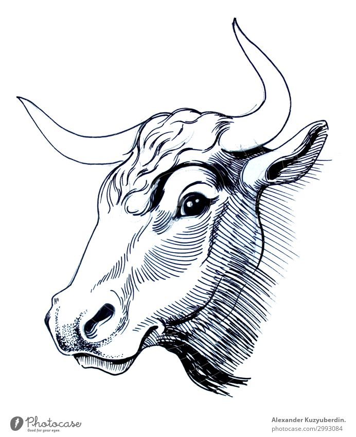 Cow head Animal Farm animal 1 Fat Authentic Natural Beautiful White Bull Head Hornsund Art Image Illustration Drawing Ink black Black & white photo