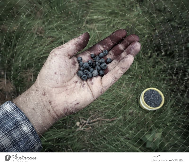 Make blue Leisure and hobbies Man Adults Hand 45 - 60 years Environment Nature Earth Summer Beautiful weather Grass Blueberry Forest Bucket Full Healthy