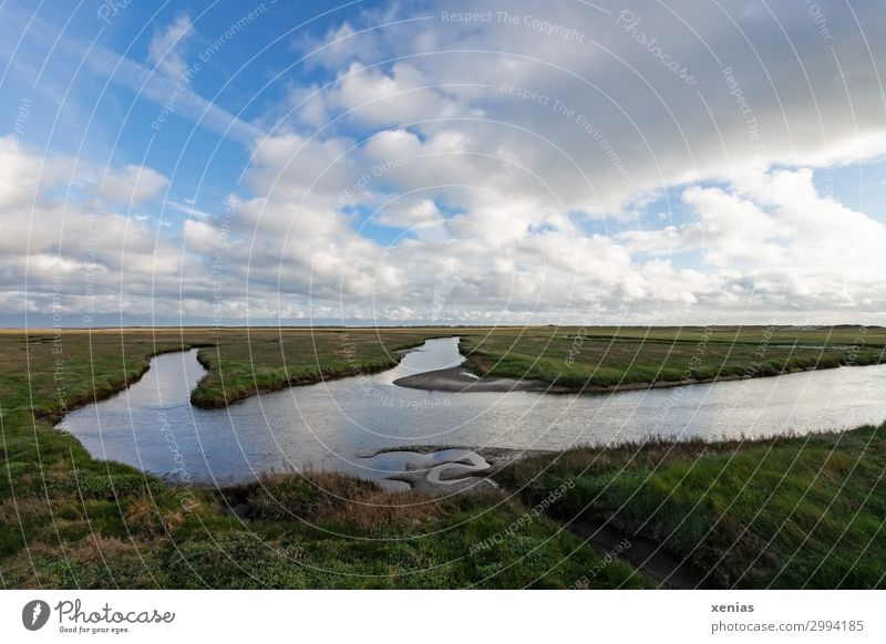 salt marshes Vacation & Travel Summer Nature Landscape Animal Sky Clouds Spring Beautiful weather Plant Grass glasswort Meadow Coast North Sea St. Peter-Ording