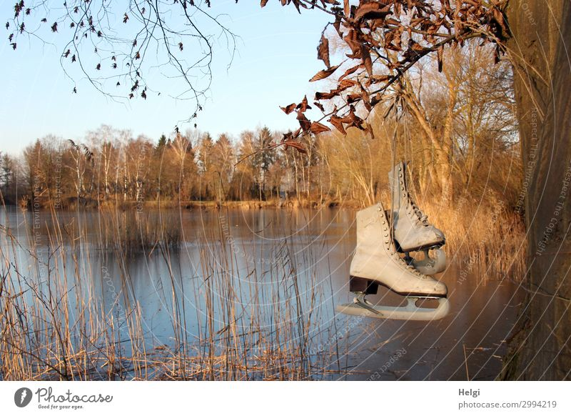 Landscape with frozen lake and historical skates on the tree Sports Winter sports Environment Nature Plant Cloudless sky Ice Frost Tree Grass Lakeside