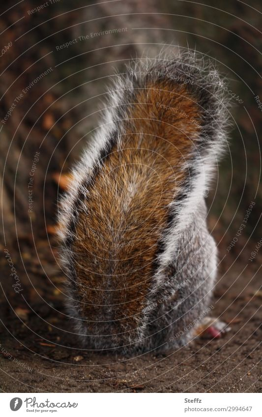 keep cloudy Nature Garden Park Animal Pelt Squirrel Tails 1 Stand Cool (slang) Brash Natural Beautiful Brown Disinterest Cancelation Defiant Opposite Covered