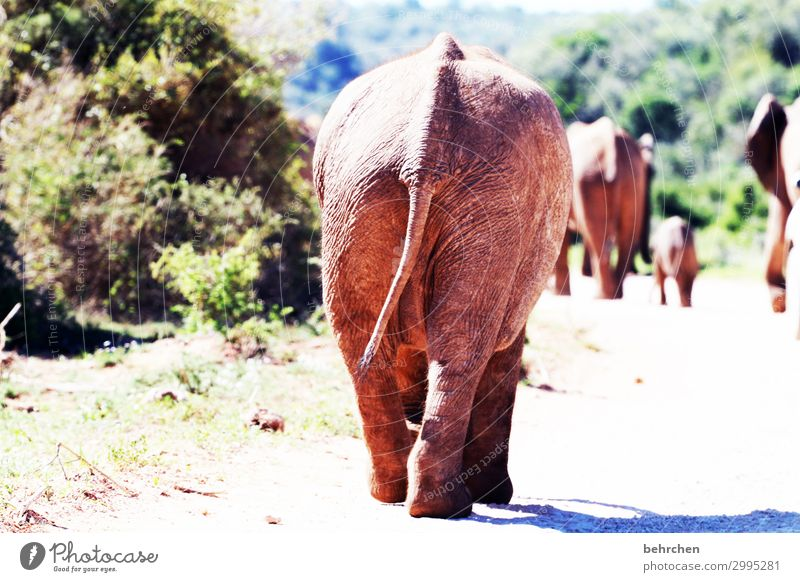 Vacation & Travel Far-off places Street Tourism Exceptional Freedom Trip Wild animal Adventure Walking Fantastic Wanderlust Exotic Hind quarters Tails Elephant