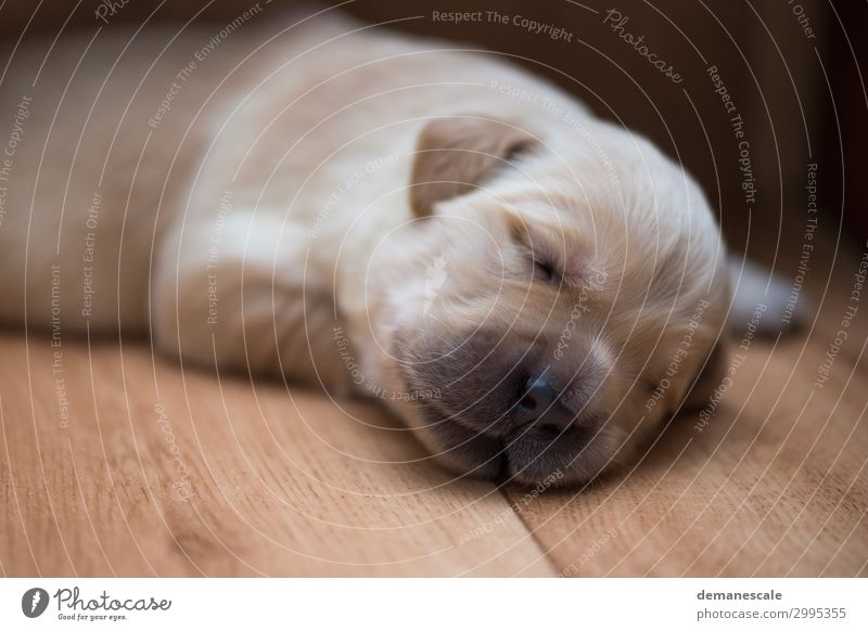 Dog White Animal Black Healthy Baby animal Wood Happy Small Brown Moody Contentment Dream Lie Authentic Cute