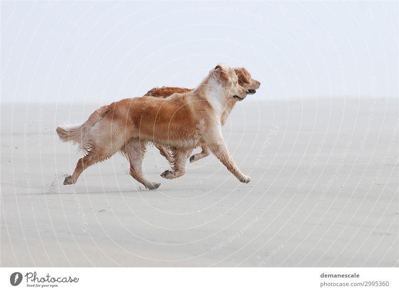 sandpiper Animal Pet Dog Pelt Animal tracks 2 Pair of animals Sand Walking Authentic Elegant Friendliness Happiness Happy Infinity Muscular Natural Curiosity