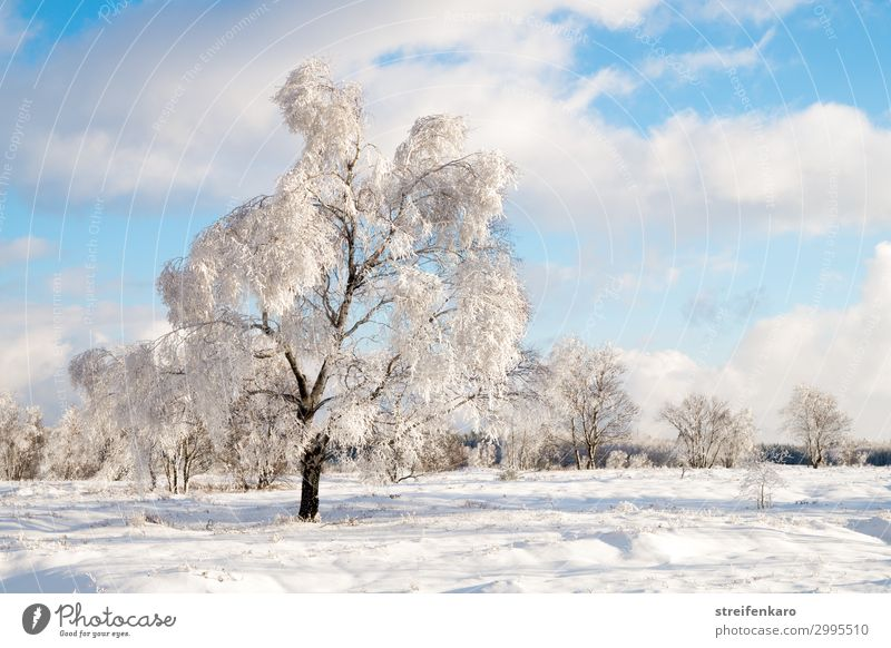 winter sun Hiking Winter Snow Environment Nature Landscape Plant Elements Water Sky Clouds Beautiful weather Ice Frost Tree Bog Marsh Fen High venn Relaxation