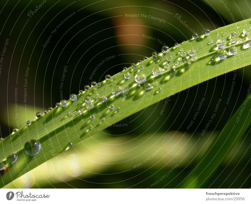 Water Meadow Rain Rope Blade of grass