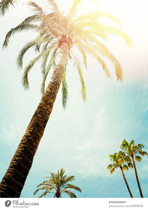 palm Vacation & Travel Tourism Summer vacation Sun Sky Sunlight Beautiful weather Tree Foliage plant Wild plant Exotic Palm tree Wood Blue Yellow Green