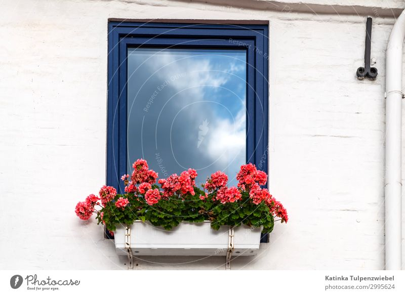 Sonne und Wolken, Fenster, Reflektion und Geranien = Sommer House (Residential Structure) Dream house Wall (barrier) Wall (building) Window Blue Multicoloured
