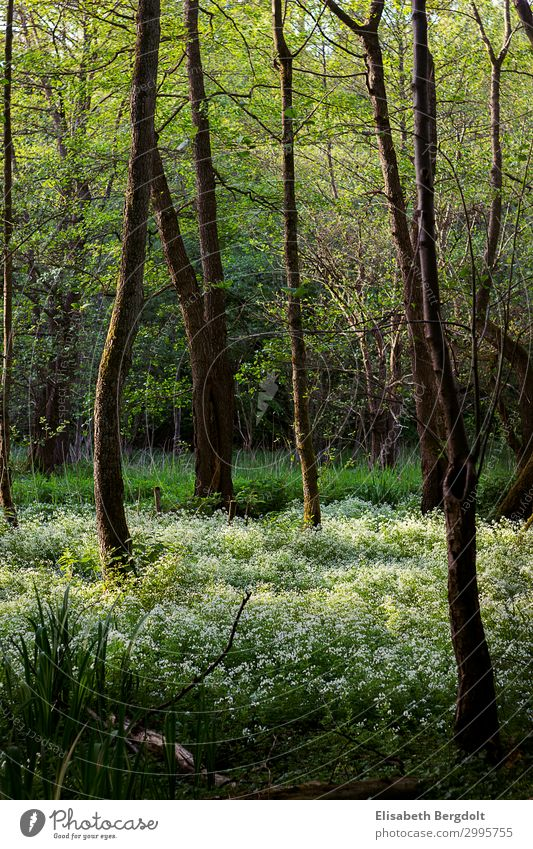 Blossoming forest Environment Nature Landscape Plant Spring Beautiful weather Tree Flower Grass Bushes Foliage plant Wild plant Forest Growth Natural Warmth