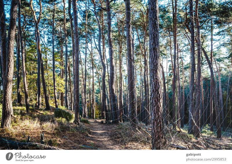 in the wood Wellness Life Well-being Senses Relaxation Calm Meditation Fragrance Trip Hiking Environment Nature Landscape Plant Sun Spring Summer Autumn